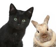 Schwarze Katze und Kaninchen. Nahaufnahmeportrait Stockfoto