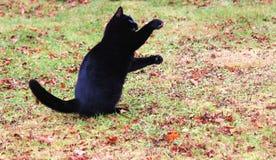 Schwarze Katze und Mittagessen Stockbild