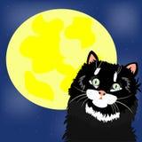 Schwarze Katze und Mond Stockfotos