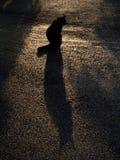 Schwarze Katze und sein Schattenbild Stockfotos