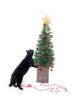 Schwarze Katze und Weihnachtsbaum Lizenzfreies Stockfoto