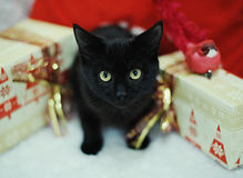 Schwarze Katze unter den Weihnachtsgeschenken Die Atmosphäre des neuen Jahres Stockbilder
