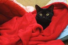 Schwarze Katze unter einer roten Decke Lizenzfreie Stockfotos
