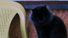 Schwarze Katze wäscht sich, draußen stock footage
