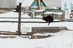 Schwarze Katze, weiße Katze auf einem Zaun im Winter lizenzfreie stockfotografie