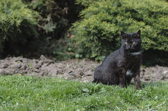 Schwarze Katze werfen auf Lizenzfreies Stockbild