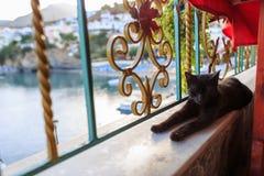 Schwarze Katze zur Siestazeit Stockbild