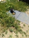 Schwarze Katze zwei, die Nahrung isst stockfotografie