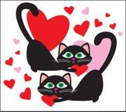 Schwarze Katzen Stockbild