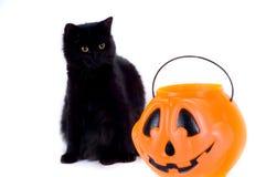 Schwarze Katzen-und Süßigkeits-Kürbis. lizenzfreies stockfoto