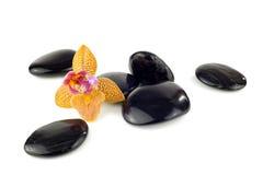 Schwarze Kiesel mit Orchidee Lizenzfreie Stockbilder