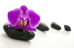 Schwarze Kiesel und Orchidee blühen mit Wassertropfen Stockfotografie