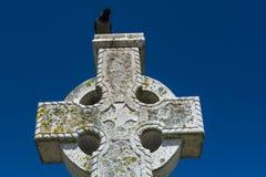 Schwarze Krähe auf keltischem Steinkreuz stockfotos
