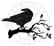 Schwarze Krähe, die auf einer Niederlassung einer Eiche sitzen, und skandinavische Runen stock abbildung