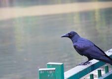 Schwarze Krähe gehockt auf einem Zaun Lizenzfreies Stockfoto