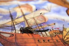 Schwarze Libelle sitzt im Bild mit dem Schiff Stockbilder