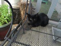 Schwarze Miezekatze, die gerade auf Halloween wartet lizenzfreies stockfoto
