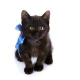Schwarze Miezekatze mit einem blauen Bogen Stockfoto
