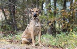 Schwarze Mund-Kanaillemischungs-Hundeannahme lizenzfreies stockbild
