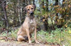 Schwarze Mund-Kanaillemischungs-Hundeannahme stockfoto