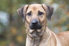 Schwarze Mund-Kanaillemischungs-Hundeannahme lizenzfreie stockfotografie