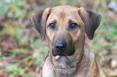 Schwarze Mund-Kanaillemischungs-Hundeannahme lizenzfreie stockfotos