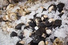 Schwarze Muscheln auf Eis Stockfotos