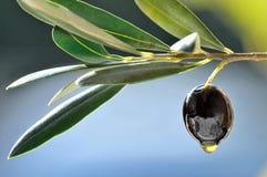 Schwarze Olive Lizenzfreie Stockbilder