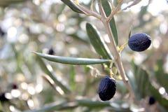 Schwarze Oliven auf Niederlassung stockbilder