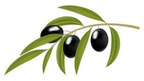 Schwarze Oliven auf Zweig lizenzfreie abbildung