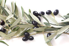 Schwarze Oliven mit Blättern auf einem weißen Hintergrund Lizenzfreies Stockfoto