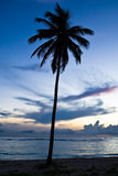 Schwarze Palme auf Nachtstrand Stockfotografie
