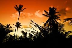 Schwarze Palme auf Nachtstrand Lizenzfreies Stockbild