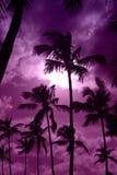 Schwarze Palme auf Nachtstrand Stockfoto