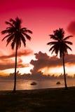 Schwarze Palme zwei auf Nachtstrand Stockbilder