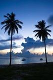 Schwarze Palme zwei auf Nachtstrand Lizenzfreies Stockfoto