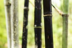 Schwarze Schönheit Stockbilder
