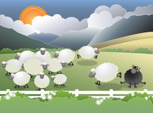 Schwarze Schafe auf dem Gebiet vektor abbildung