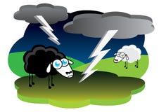 Schwarze Schafe mit Blitzsturm Stockbilder