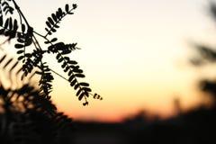 Schwarze Schattenbilder im Sonnenuntergang lizenzfreies stockfoto