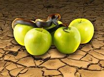 Schwarze Schlange und Äpfel auf gebrochener Erde Lizenzfreie Stockfotografie