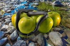 Schwarze Schlange und Äpfel auf Stein des Flusses Stockfotografie