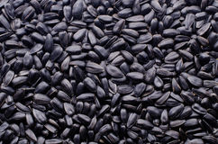 Schwarze Sonnenblumensamen Lizenzfreies Stockfoto