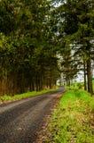 Schwarze Straße im Wald Lizenzfreies Stockfoto