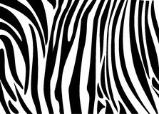 Schwarze Streifenhaut des Zebras Lizenzfreies Stockbild