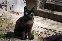 Schwarze Streukatze sitzt im Hinterhof Mystische schwarze Katze mit grünen Augen Dunkelbraune Straßenkatze in einem verlassenen P lizenzfreies stockfoto