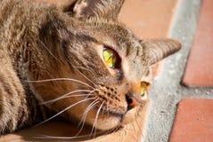 Schwarze Tabbykatze mit grünen Augen im Sonnenschein Lizenzfreies Stockbild