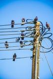 Schwarze Tauben auf Strom Lizenzfreie Stockfotografie