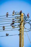 Schwarze Tauben auf Strom Lizenzfreies Stockbild