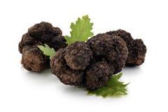 Schwarze Trüffeln und Eichenblätter Lizenzfreies Stockfoto